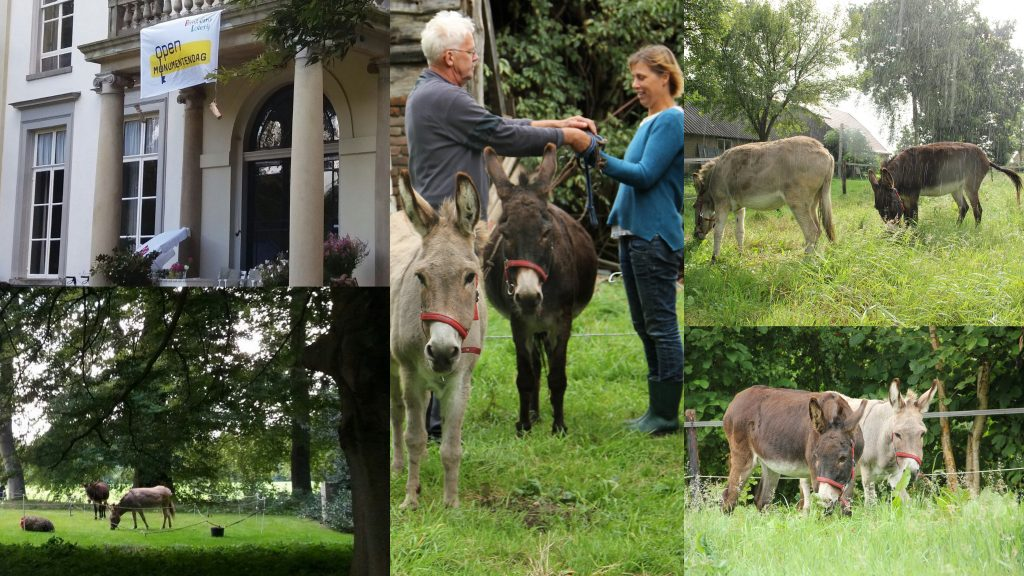 donkey en sandy